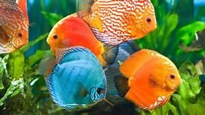 Süßwasserfische Fürs Aquarium : s wasseraquaristik in schwerin aquarien fische und zubeh r ~ Lizthompson.info Haus und Dekorationen