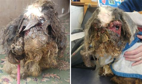 matted dog  leg fused   face  shock pictures
