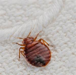 calgary bed bug pest control exterminator services With bed bugs calgary