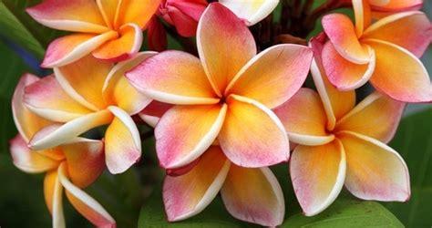 tahiti nature wildlife tahiti vacation  goway