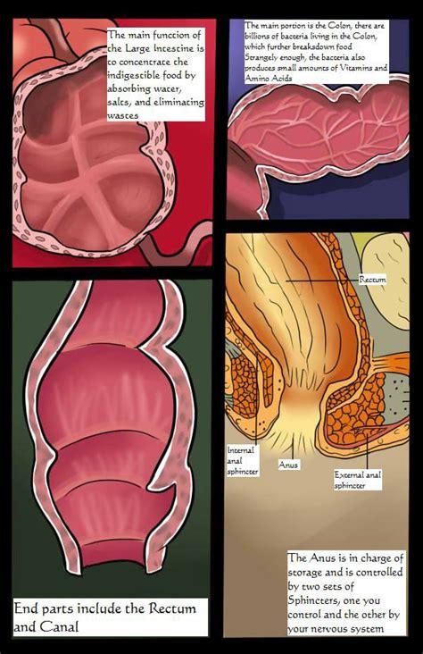 vore digestion scat comic mega porn pics