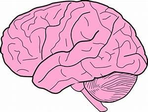 Brain Clip Art at Clker.com - vector clip art online ...