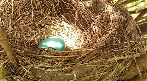 nest eggs  thermostats mrcool