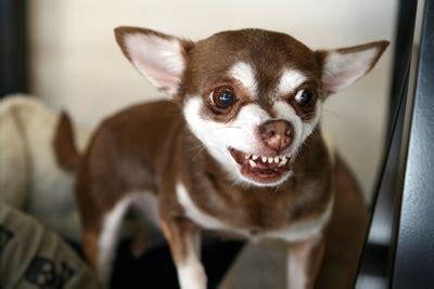 dog  aggressive  strangers