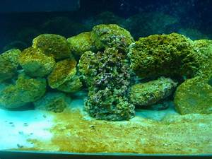 marine fish tank maintenance algae - Saltwater Aquarium ...