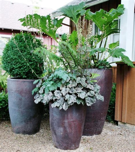 planter pasteque en pot image of potted plants shade container garden potted plant ideas plants