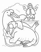 Walrus Coloring Printable sketch template