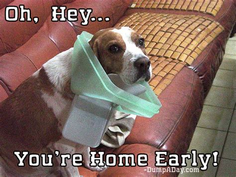 The Best Of Youre Home Early 24 Pics