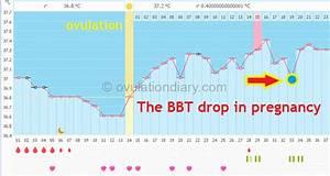 The Basal Body Temperature Drop  Interpretation  U0026 Charts