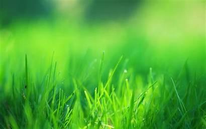 Grass Field 4k Desktop Wallpapers Resolution Nature