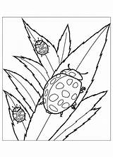 Coloring Insects Bug Lady Ladybug Leaves Flying Squirrel Printable Sheets Eating Bugs Colouring Cliparts Colorluna Leaf Children Adult Animal Insect sketch template