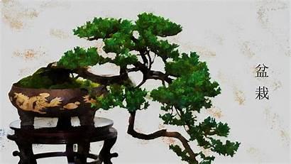 Bonsai Tree Japanese Wallpapers Plant Pot Artistic