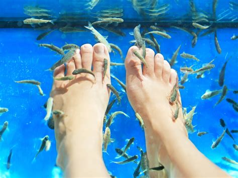 everything you need to about fish pedicures