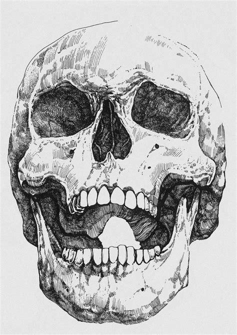 Human Skull Ink Drawing Mikolaj Cielniak