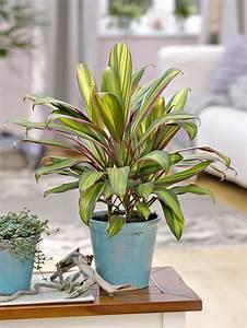 4 Plantes D39intrieur Spcial Amateurs Dtente Jardin