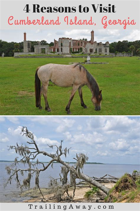 4 Reasons To Visit Cumberland Island, Georgia  Trailing Away