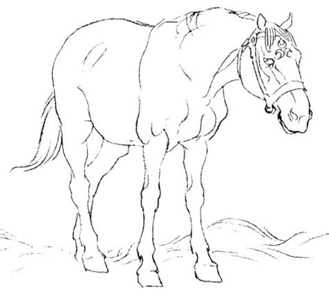 printable realistic horse coloring pages  getcoloringscom  printable colorings