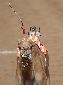 Course De Chameau : maine et loire 49 cheval balade cheval pension cheval pension equestre tourisme equestre ~ Medecine-chirurgie-esthetiques.com Avis de Voitures