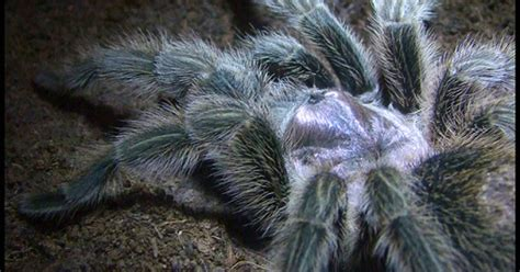 Types Of Exotic Pets articles Keeping Exotic Pets