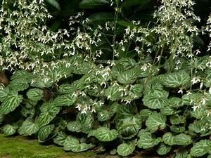 Welche Pflanzen Gegen Wespen : 4931 best gartengestaltung garten und landschaftsbau ~ Lizthompson.info Haus und Dekorationen
