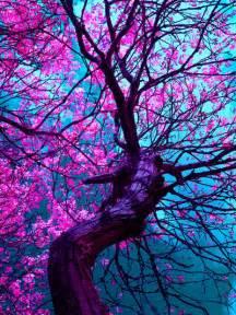 photography tree beautiful purple colors leaves inhale vint4ge