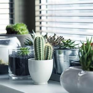 zimmerpflanzen mit bluten exotische wohnzimmer With whirlpool garten mit schädlingsbekämpfung bei zimmerpflanzen