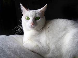 White Cat Green Eyes Photograph by Donna Hickerson