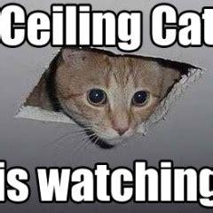 Ceiling Cat Meme - two old memes total fluff
