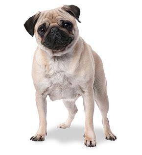 bangor veterinary hospital bangor maine pet care