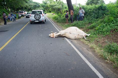 Nica road kill – BOARD RAP