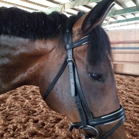 pin horses galore horses animals gucci