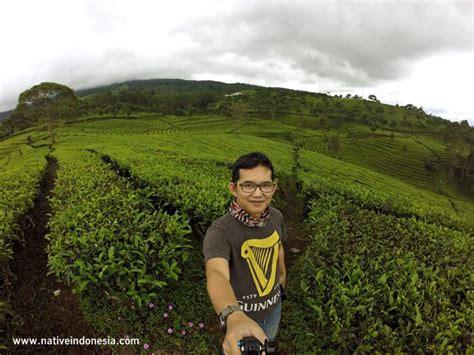 segarnya kebun teh sukawana  lembang ga jauh  bandung
