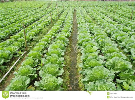 vegetable farm pictures vegetable farm stock photo image 22519880