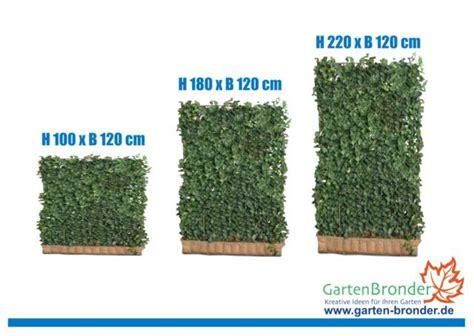Efeu Hecke Co Sichtschutz Im Garten by 1x Mobilane Fertighecke 174 Efeuhecke Efeusichtschutz