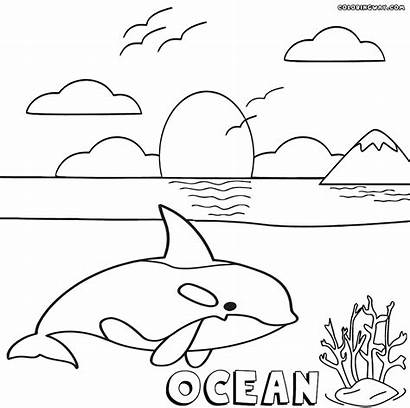 Ocean Coloring Pages Orca Colorings