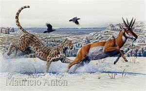 VANISHED WITH THE SABERTOOTHS: THE AMERICAN CHEETAHS ...