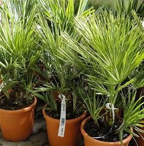 Pflanztopf Für Palmen : sommerfrische f r zimmerpflanzen unser lagerhaus whg ~ Lizthompson.info Haus und Dekorationen