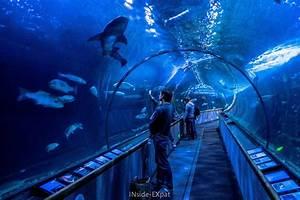 See and touch at Aquarium of the Bay (San Francisco, CA ...