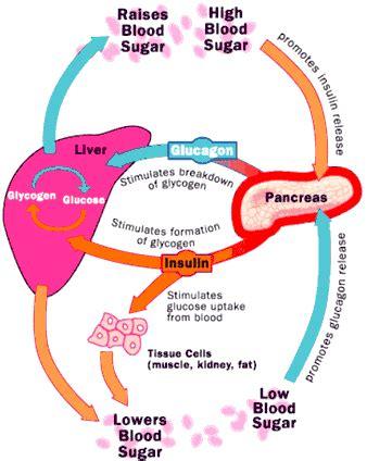 diabetes india metabolic effects  insulin glucagon