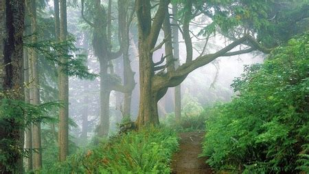 forest path forests nature background wallpapers