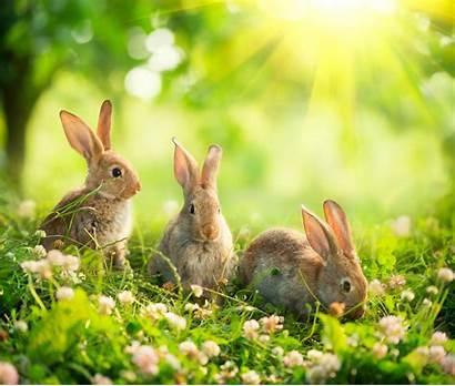 Bunny Rabbit Wallpapers Theme Tab Bunnies Rabbits