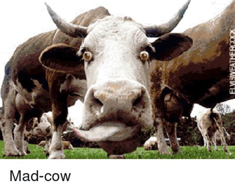 Mad Cow Disease Meme - mad cow disease meme 28 images the vegetarian bodybuilding diet it can be done mad cow