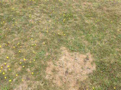 Wie Oft Rasen Vertikutieren by Vertikutieren Wie Tief Wie Oft Vertikutieren Rasen