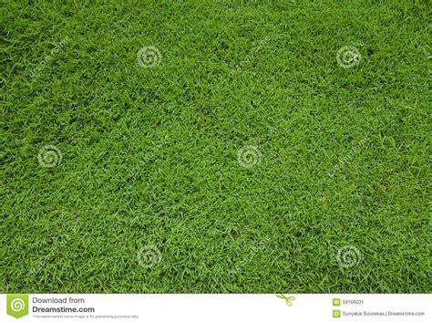 grass texture floor green grass turf floor texture stock photo image 59166031