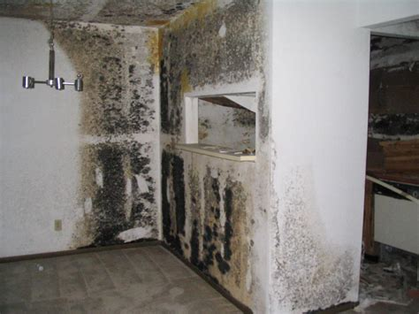 toxic black mold poisoning everdry grand rapids