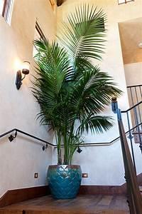 Palmen Für Drinnen : die besten 25 zimmerpflanze palme ideen auf pinterest innen palmen gro e zimmerpflanzen ~ Bigdaddyawards.com Haus und Dekorationen