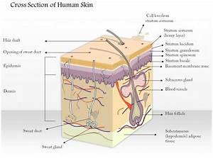 84140675 Style Medical 1 Integumentary 1 Piece Powerpoint