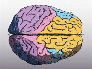 Colorful Brain Vector
