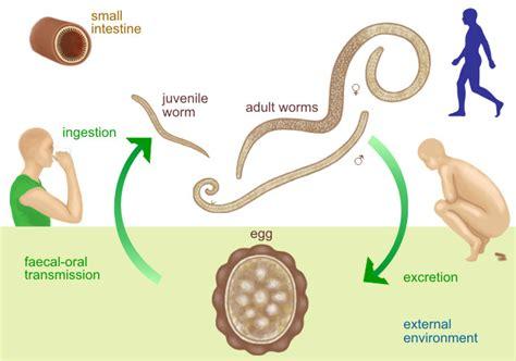 Ascariasis Lumbricoides