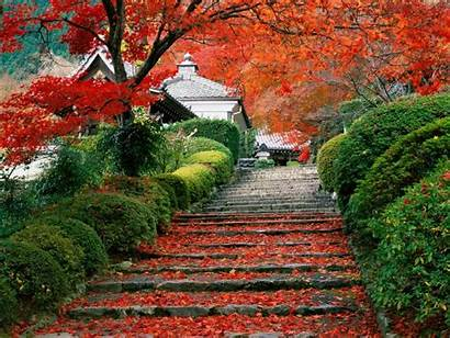 Places Fanpop Place Tree Pretty Beauty Country